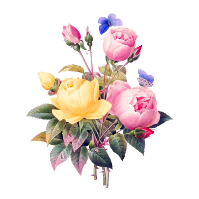 Quality Rose Drawing, Floral Transparent Hd PNG Images