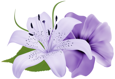 White And Purple Orchid Floral Hd Transparent PNG Images