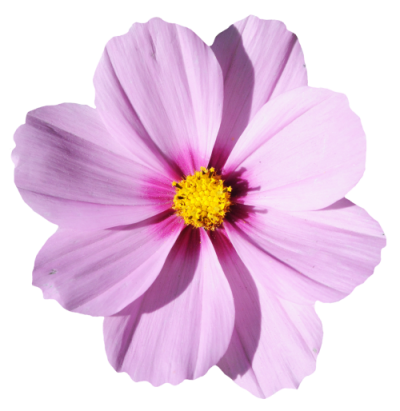 Blossom Flower Png Transparent Picture