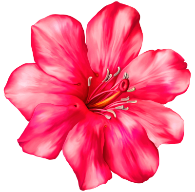 Exotic Pink Flower Png Clipart Picture