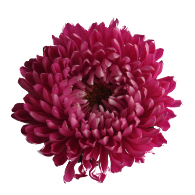 Exotice Flower Png PNG Images