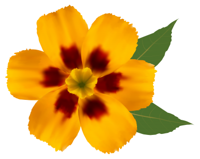 Flower Png Image Daisy PNG Images