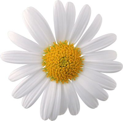 Flowers Png Images, Download Photos