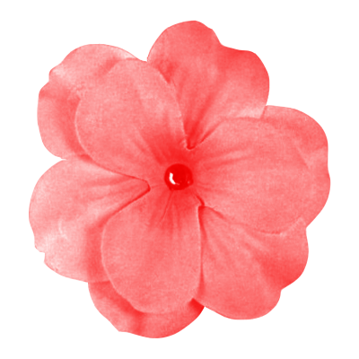 Pink Daisy Flowe Png PNG Images