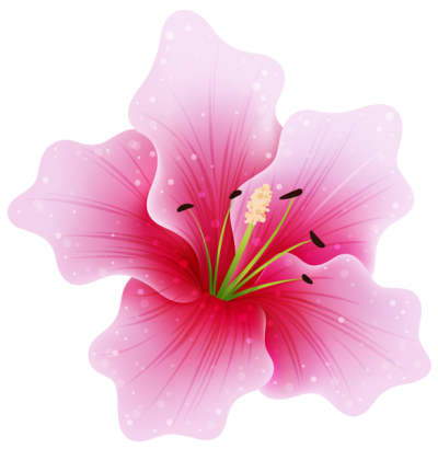 Pink Flower Png PNG Images
