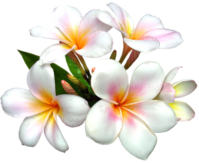 White Large Png Flower PNG Images