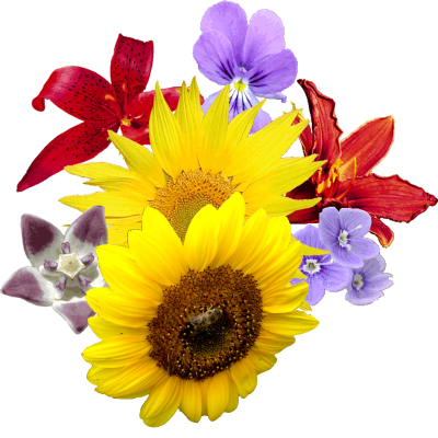 Flowers Clipart Photo