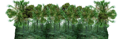 Forest Transparent Image PNG Images