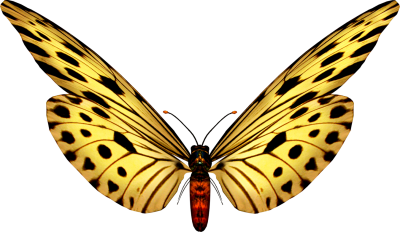 Beautiful Yellow Butterfly Fotos Transparent Background Free Download