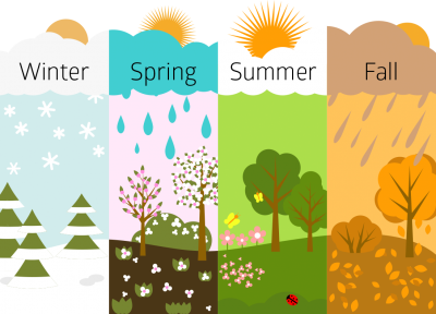 Rain, Snow, Tree, Leaf, Pine, Tree, Sunny, Images PNG Images