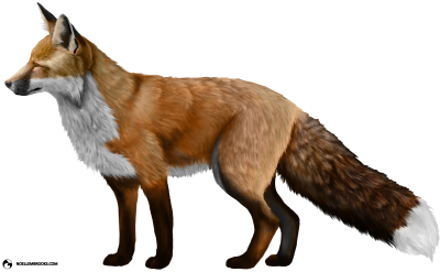 Fox High Quality PNG PNG Images