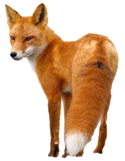 Fox PNG Icon PNG Images