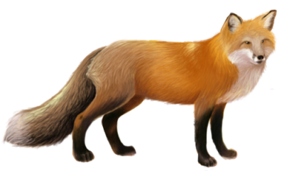 Download FOX Free PNG transparent image and clipart