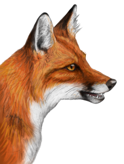 Fox Icon Clipart PNG Images