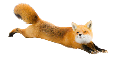 Fox Picture PNG Images