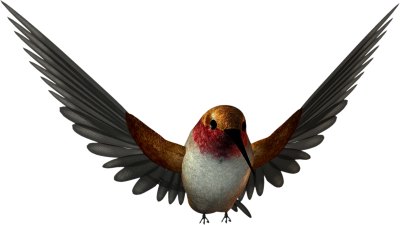 Birds Png Graphic Clipart Best PNG Images