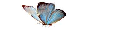 Butterfly Transparent Png Images Fade Example PNG Images