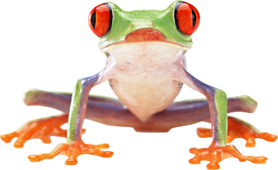 Frog Clipart Transparent
