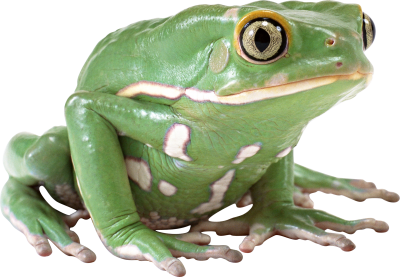 Frog Cut Out Png PNG Images
