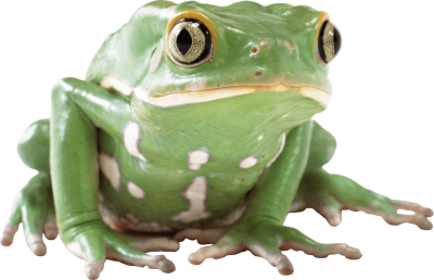 Frog Images PNG PNG Images