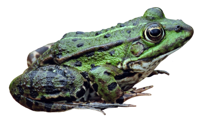 Frog High Quality PNG PNG Images