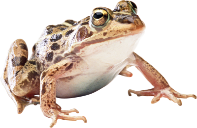 Frog HD Image PNG Images