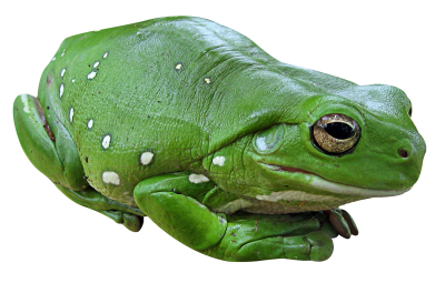 Frog Water Vector PNG Images
