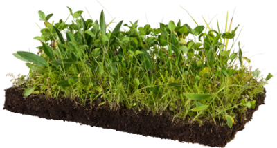 Soil, Fertilizer Plant Garden Transparent Hd PNG Images