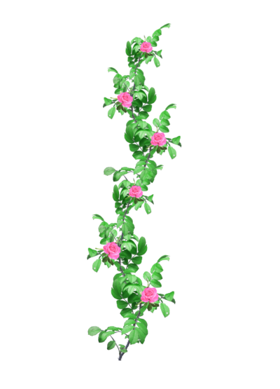 Rose Garland Png PNG Images