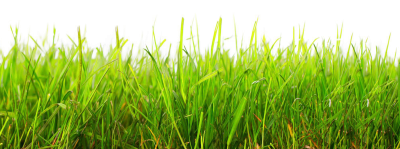 Grass Transparent Image, Field, Plant, Natural, Growth PNG Images