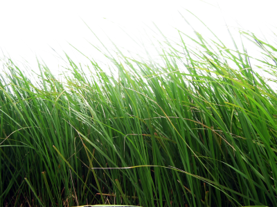 Green Grass Picture, Ground, Soil, Garden PNG Images