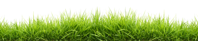Green Grass Background, Wheat, Gathering, Root, Plant PNG Images