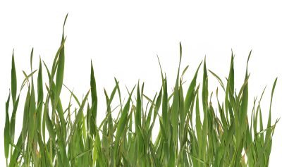 Yellowed Grass HD Drawing, Autumn, Season, Natural PNG Images