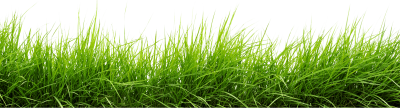 Mixed Green Grass View Transparent, Plant, Meadow, Soil PNG Images