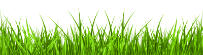 High Quality Green Download Grass, Rooted, Summer, Winter PNG Images