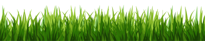 PNG Bottom Green Grass, Growth, Yield, Production PNG Images
