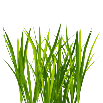 Transparent Tall Grass Picture, Chamomile, Root, Soil PNG Images