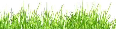 Large Size Green Grass Photo, Naturalness, Greens, Vegetables, Fruits, Seeds PNG Images