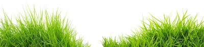 Double Sided Green Grass Photo, Photoshop, Design Photos, Montage PNG Images
