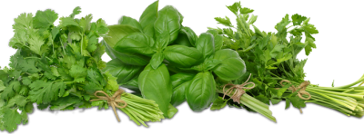 Herbs Clipart HD PNG Images