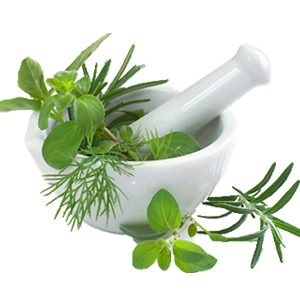 Herbs Amazing Image Download PNG Images
