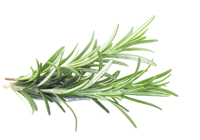 Herbs Clipart PNG Photos PNG Images
