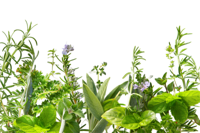 Herbs Clipart Photo PNG Images