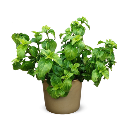 Herbs HD Image PNG Images