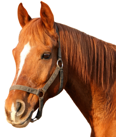 Horse Clipart Hd PNG PNG Images