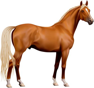 Amazing Horse PNG PNG Images