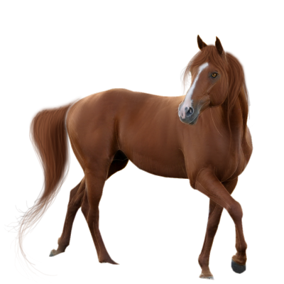Animal Horse Cut Out PNG Images