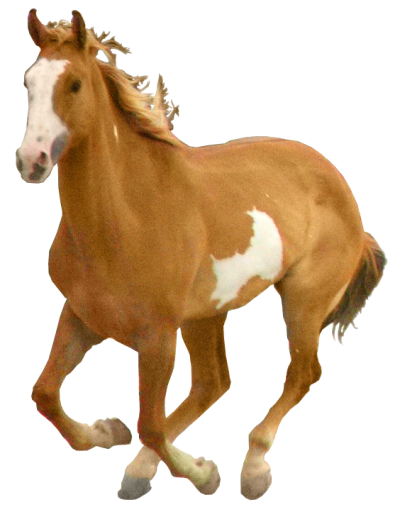 Horse Clipart, Free Picture Download