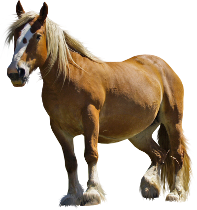 Middle Horse Hd Image PNG Images