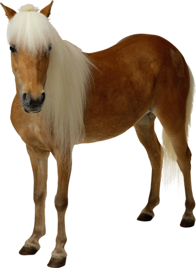 Cute Horse PNG Images